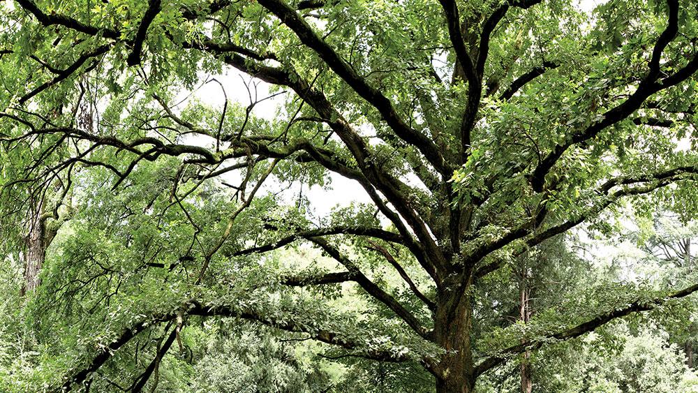 L'albero. Vita e morte di un immortale presentato a Milano Rho Fiera